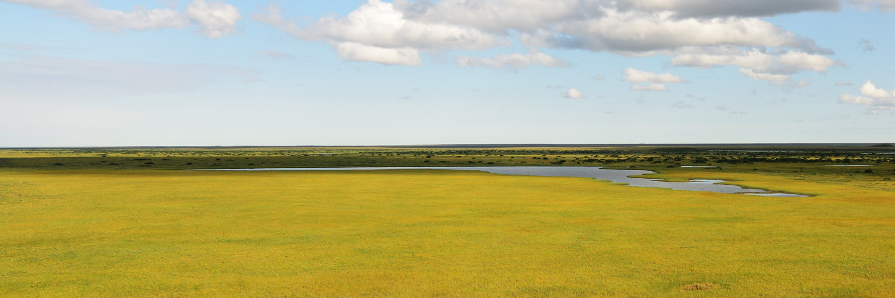 The endless green tundra and wetlands of Alaska's North Slope